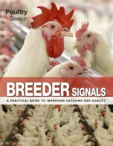 About Poultry Signals